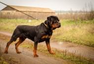 Avoir un chien de garde